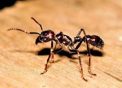 Combattere le formiche - Formiche in bagno ...